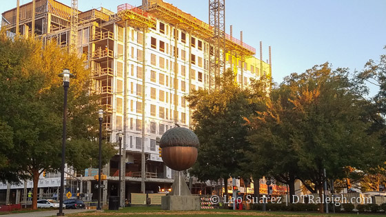 Raleigh's Giant Copper Acorn